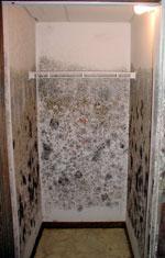 Moldy Drywall in a Brandon, Manitoba Rental