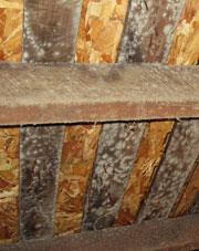 Wood Sub Floor in Portage La Prairie with Mold